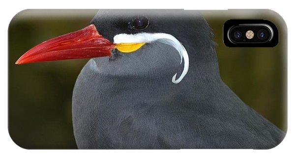 Inca Tern  IPhone Case