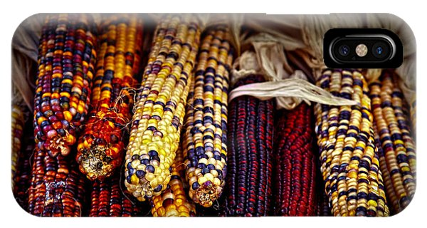 Vegetables iPhone Case - Indian Corn by Elena Elisseeva