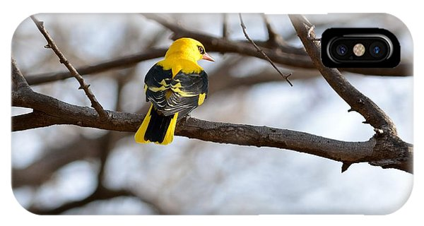 Indian Golden Oriole IPhone Case