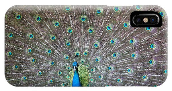 Peafowl iPhone Case - Indian Or Blue Peacock by Unknown
