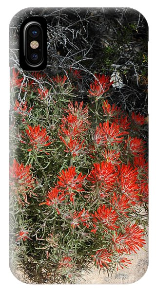 333p Indian Paintbrush Flower IPhone Case