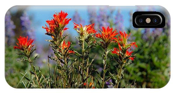 Scarlet Paintbrush iPhone Case - Indian Paintbrush by Robert Bales