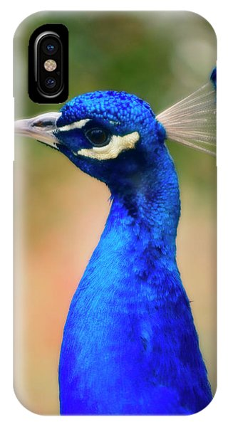 Peafowl iPhone Case - Indian Peacock by Maria Mosolova/science Photo Library