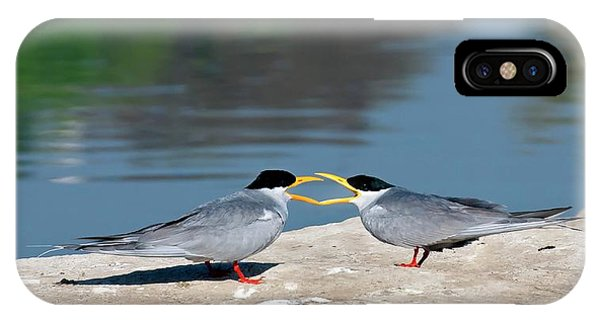 Behaviour iPhone Case - Indian River Terns Greeting by K Jayaram
