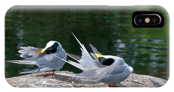 Behaviour iPhone Case - Indian River Terns Preening by K Jayaram