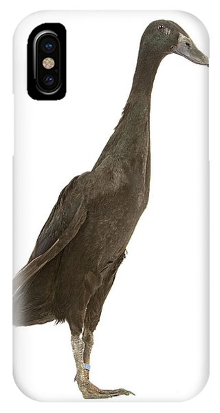 Indian Runner Duck IPhone Case