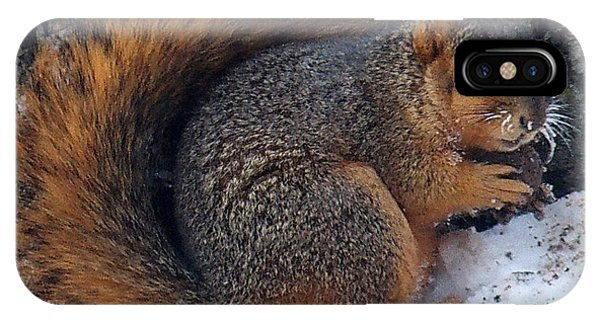 Indiana Squirrel In Winter With Nut IPhone Case