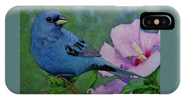Bunting iPhone Case - Indigo Bunting No 1 by Ken Everett