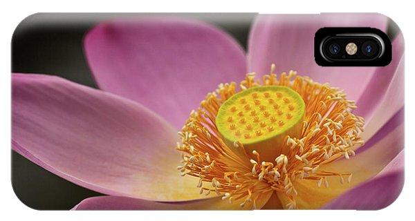 Aquatic Plants iPhone Case - Indonesia, Bali, Ubud, Nyuh Kuning by Alida Latham