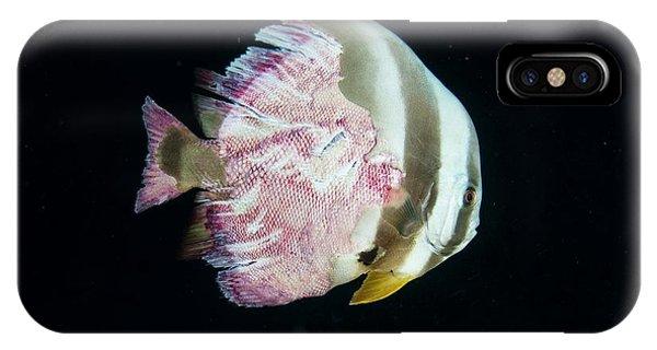 Injured Longfin Spadefish IPhone Case