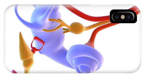 Nerves iPhone Case - Inner Ear Anatomy by Alfred Pasieka