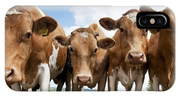English Countryside iPhone Case - Inquisitive Cows by Tim Gainey