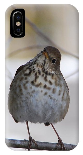 Inquisitive Hermit Thrush IPhone Case
