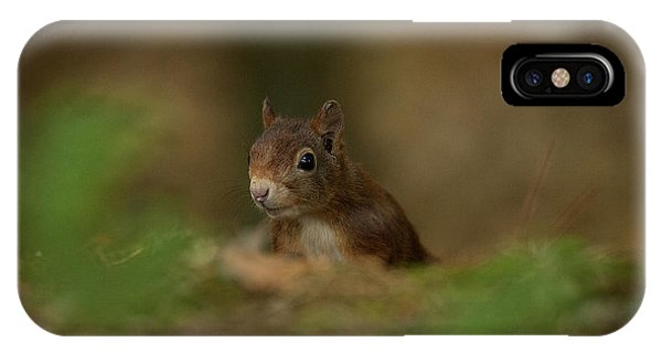 Inquisitive Red Squirrel IPhone Case