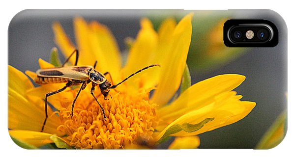 Insect On Cowpen Daisy IPhone Case