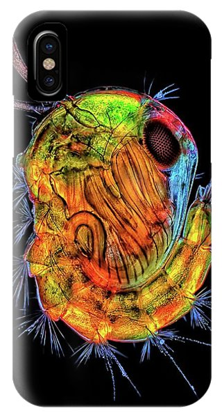 Insect Pupa Phone Case by Rogelio Moreno/science Photo Library