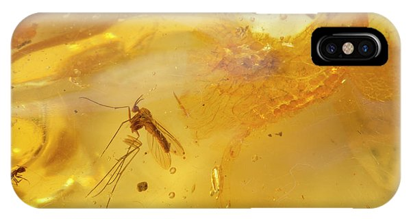 Colombia iPhone Case - Insects In Fossil Amber by Science Stock Photography