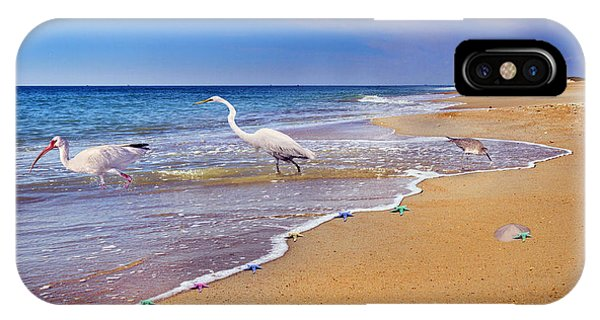 Ibis iPhone Case - Inspiring Ibis Egret Sandpiper Starfish Sand Dollars  by Betsy Knapp