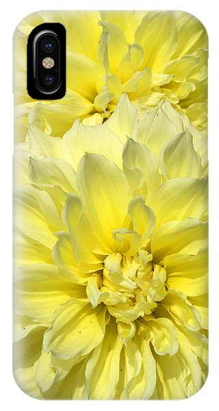 Intense Yellow Dahlias IPhone Case