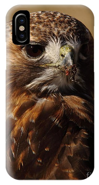 Red Tailed Hawk Portrait IPhone Case
