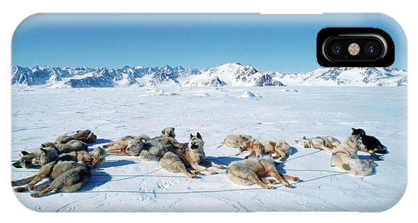 Sled Dog iPhone Case - Inuit Husky Dogs by Simon Fraser/science Photo Library