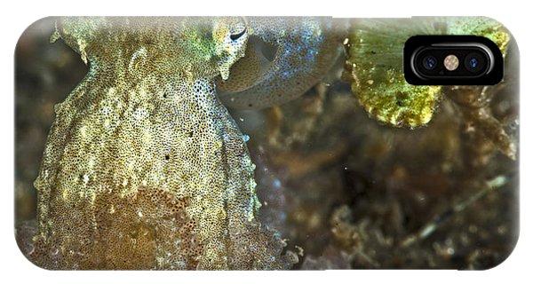 Iridescent Baby Octopus IPhone Case