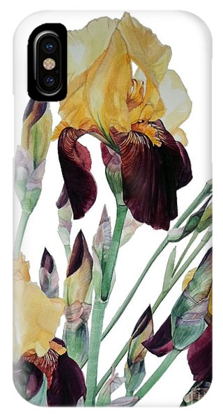 Watercolor Of Tall Bearded Iris In Yellow And Maroon I Call Iris Beethoven IPhone Case