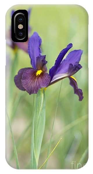 Iris Hollandica 'eye Of The Tiger' IPhone Case