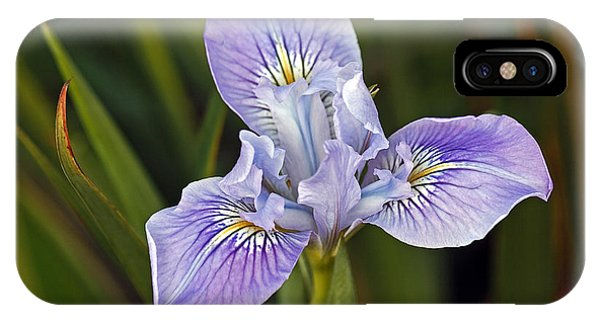 IPhone Case featuring the photograph Iris by Kate Brown