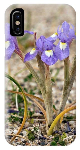 Iris (moraea Sisyrinchium 'barbary Nut') Phone Case by Bob Gibbons