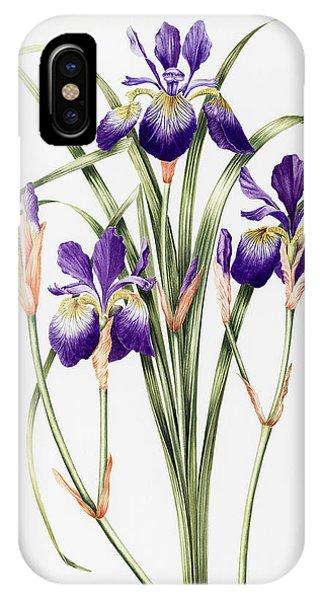 Violet iPhone Case - Irises by Sally Crosthwaite