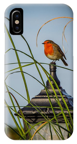 Irish Robin Perched On Garden Lamp IPhone Case
