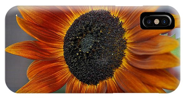 Isabella Sun IPhone Case