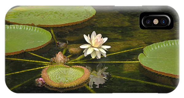 Ischian Waterlily IPhone Case