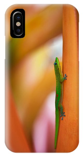Salamanders iPhone Case - Island Friend by Mike Reid