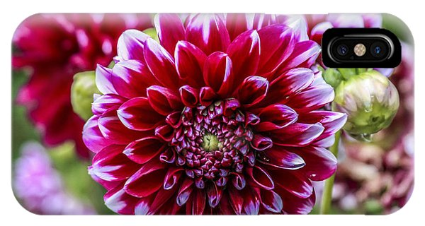 Its A Dahlia Dahling Phone Case by CarolLMiller Photography