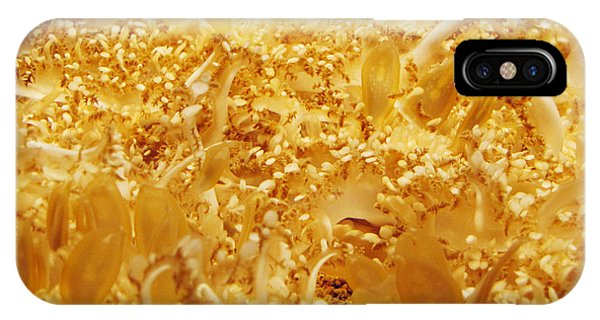 Its Alive Under Water IPhone Case