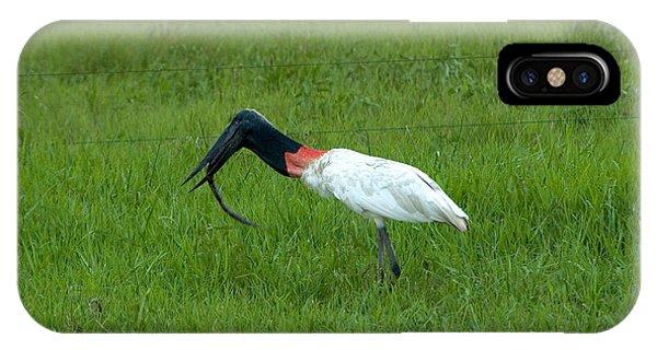 Jabiru Stork Swallowing An Eel IPhone Case