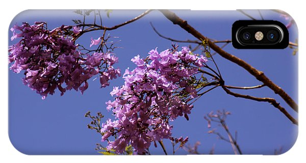 Jacaranda Blooms IPhone Case