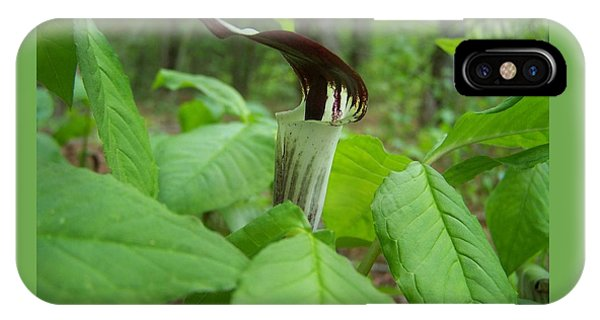 Jack In The Pulpit IPhone Case