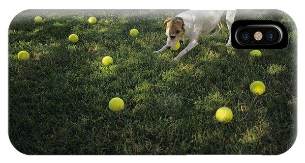 Jack Russell Terrier Tennis Balls IPhone Case
