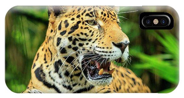 Belize iPhone Case - Jaguar (panthera Onca by Stuart Westmorland