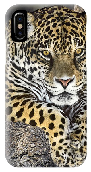 IPhone Case featuring the photograph Jaguar Portrait Wildlife Rescue by Dave Welling