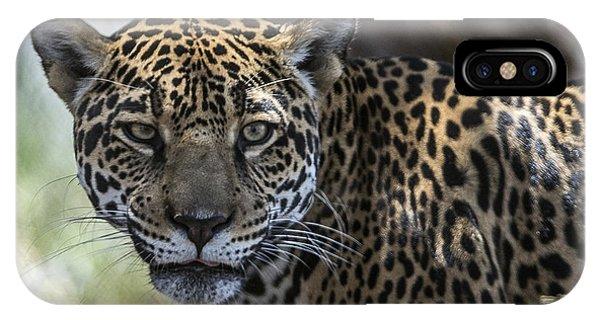 Jaguar Portrait IPhone Case