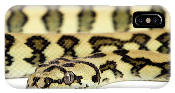 Infrared Radiation iPhone Case - Jaguar Variant Carpet Python by Pascal Goetgheluck/science Photo Library