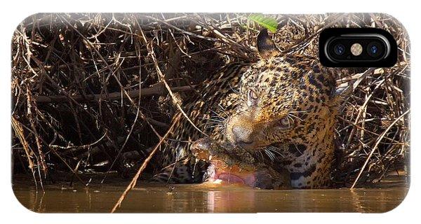 Jaguar Vs Caiman IPhone Case