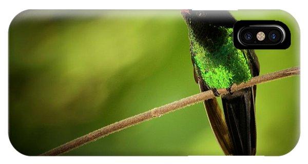 Jamaican Hummingbird 2 IPhone Case