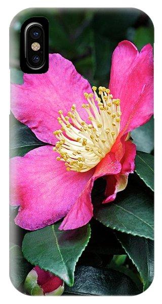 Cultivar iPhone Case - Japanese Camellia (camelia Japonica) by Dr. Nick Kurzenko