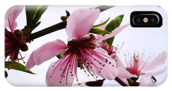Japanese Cherry Tree IPhone Case