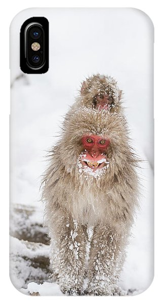 Adapted iPhone Case - Japanese Macaque Carrying Young by Dr P. Marazzi